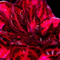 Красный дракон :: Илья Кузнецов