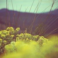 Цветы. Природа. :: Настя Щегуло