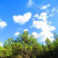 Сердечко,парящее над деревом :) :: Настя Щегуло