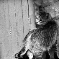 Уличный кот :: Alexandra G.