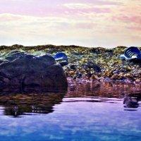 А вот и море :: Bogdana R.