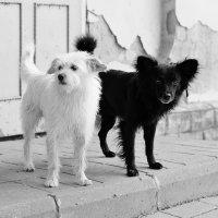 Black and White :: Александр Титов