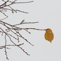 Одиночество. :: Наталья Булдакова