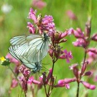 Весна, бабочки, любовь... :: Asya Piskunova