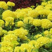 Городские цветы-1 :: Маера Урусова