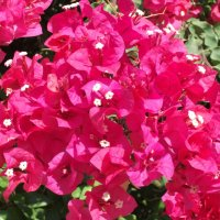 Цветы :: Елена Шидловская