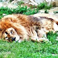 Зоопарк :: Elena Kim