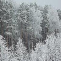Зимной на опушке :: Ramirez Грязный