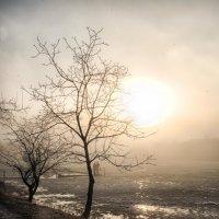 туман и солнце.. :: юрий иванов