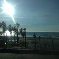 """""""В солнечном блеске купаясь, пальмы встречают сияние дня"""" :: Ирэн"""