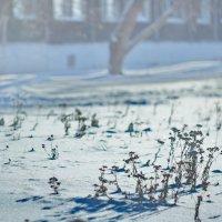 Есть что-то степное в начале зимы.... :: Михаил Полыгалов