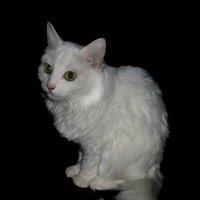 Белый кот. :: Nata