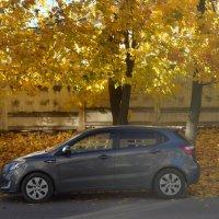 Вязьма. Осенний пейзаж... :: Владимир Павлов