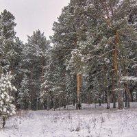 Сосново-снежное ... конечно царство! :: Михаил Полыгалов