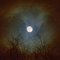 Как бледное пятно :: Валерий Симонов