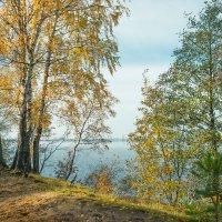 Осень на берегу озера Разлив (08) :: Виталий