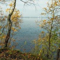 Осень на берегу озера Разлив (12) :: Виталий