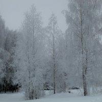 ледяные березы :: Владимир