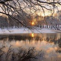Холодный рассвет ноября :: Татьяна Каневская