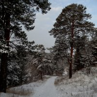 По первому снегу :: Александр Подгорный