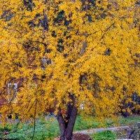 Отшумела золотая осень :: Светлана Петошина