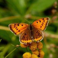 а вот и бабочки опять...20 :: Александр Прокудин