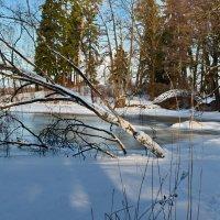 Зима :: Ирина Ярцева