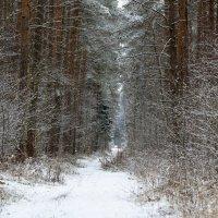зима :: Валерий Шурмиль