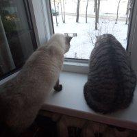 Птички за окном :: BoxerMak Mak