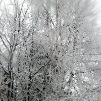 деревья в серебре :: Valentina Perfileva