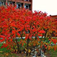 Яркие краски осени. :: Михаил Столяров