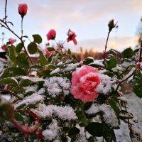 Зима пришла :: Inga Engel