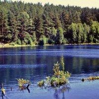 Лесное озеро :: Leonid Tabakov