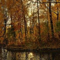 Волшебный свет... :: Sergey Gordoff