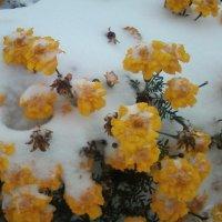 Цветы в снегу :: Dana