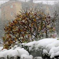 Ноябрьский снегопад :: Нина Бутко