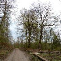 два старых деревьев и время – Весной :: Heinz Thorns