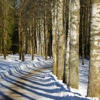 Краснодолинная аллея в Павловском парке... :: Юрий Куликов