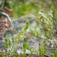 в лесу :: Юлиана