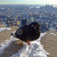 Pigeon-Kong :: Руслан Тлостанов