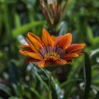 Цветы июля :: gribushko грибушко Николай