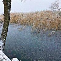 Лёгкий морозец :: Валерия Комова