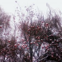 Снег и плоды :: Николай Филоненко