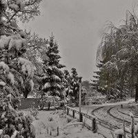 Зима ... :: Ольга Винницкая (Olenka)