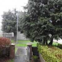 И разразился ливень с градом :: Natalia Harries