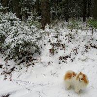 Прогулка в сказочном еловом лесу :: Елена Павлова (Смолова)