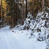 Зимний лес :: Леонид Никитин
