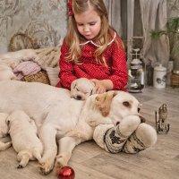 Рождественские истории :: Ольга Шеломенцева