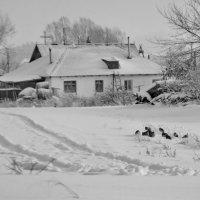 Куропатки сбоку дороги :: Светлана Рябова-Шатунова