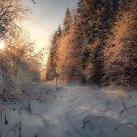Дорога в лесу :: Fuseboy